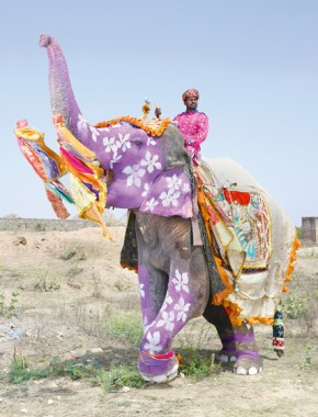 The painted elephants ofRajasthan