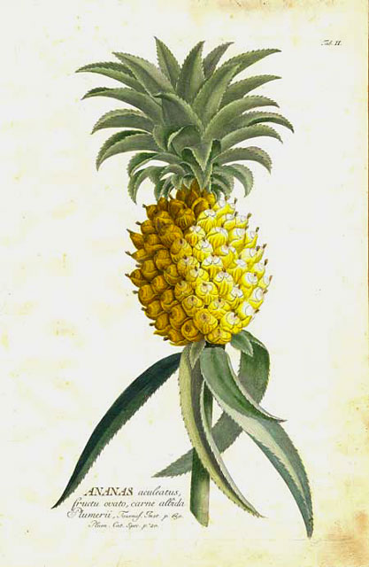 http://www.ursusbooks.com/print_botanical.cfm via Tiny Pineapple
