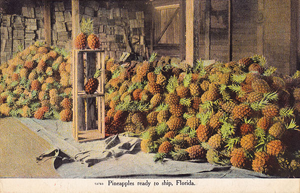 pineapples-ready-to-ship-florida-small