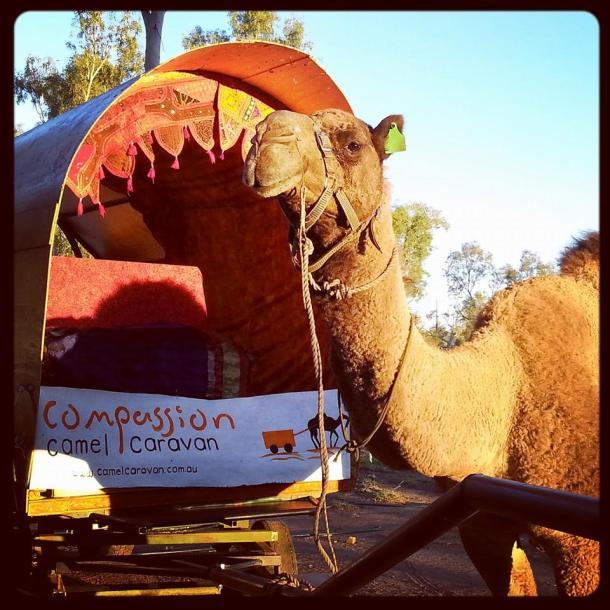 camel03
